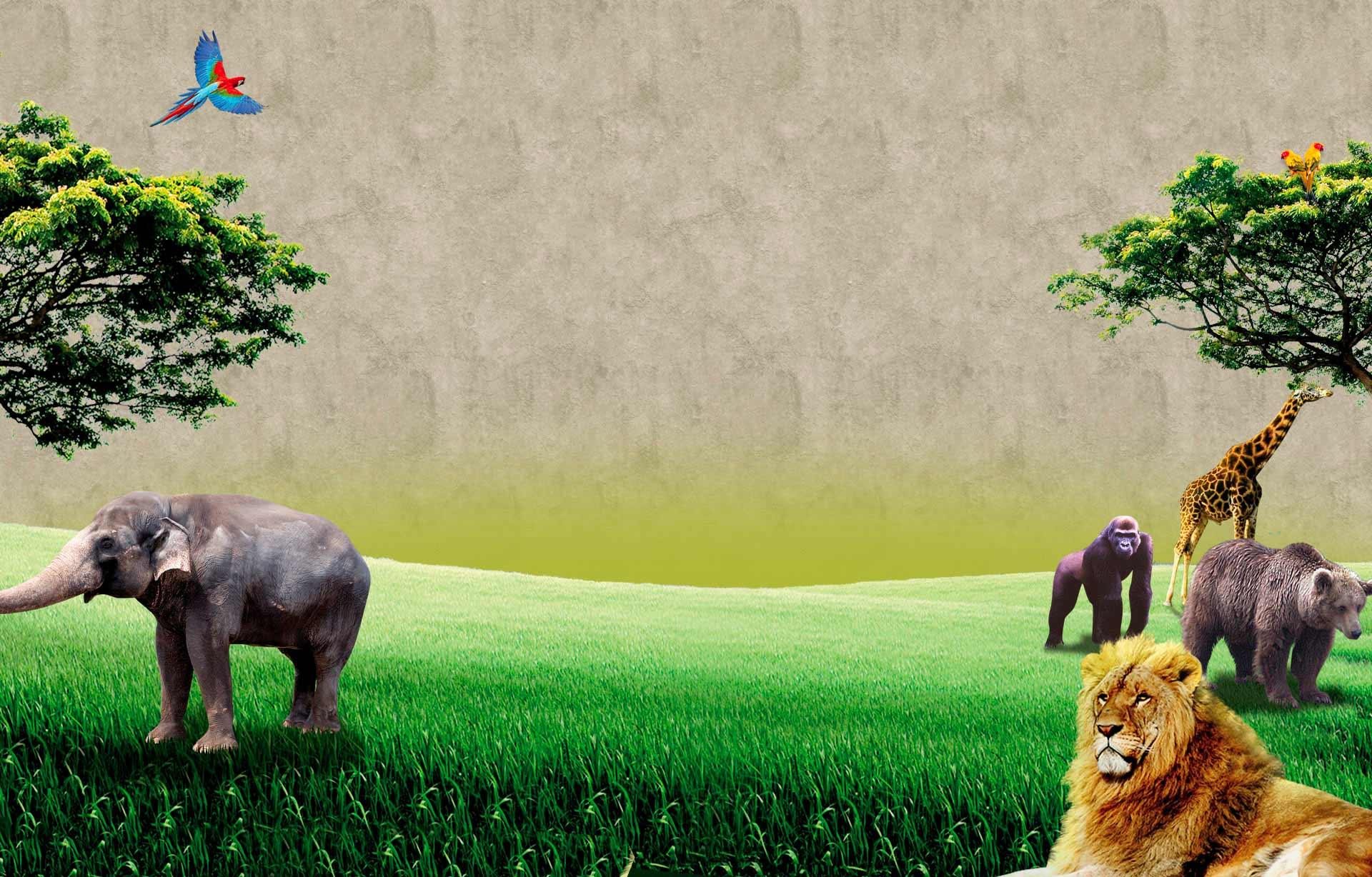Safari Jungle Invitations was great invitations example